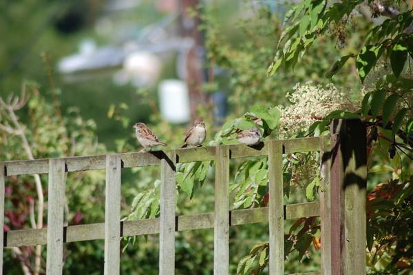 Three Little Birds by Bearspirit29