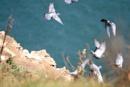 Pigeons in flight...