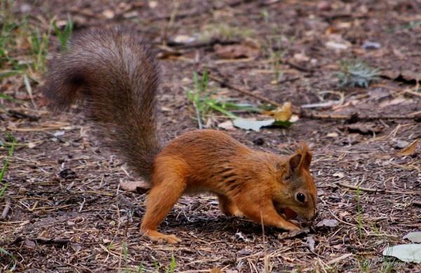 My Nut! by Evgenya