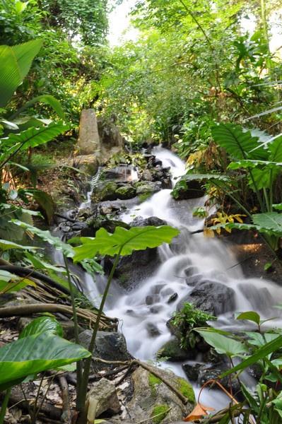 Rain forest stream by DELETEME