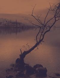 Crannog & Tree Loch Tay