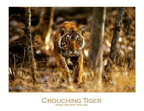 Crouching Tiger by MarkVMueller