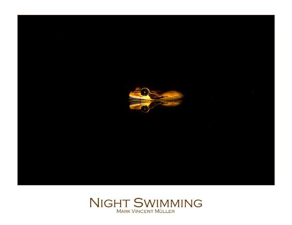 Night Swimming by MarkVMueller