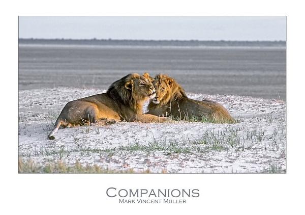 Companions by MarkVMueller