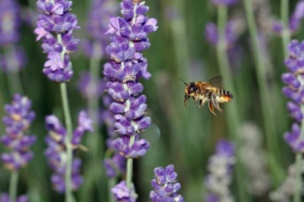 buzz buzz by glennmeeds