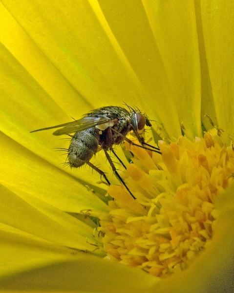 Ugly Bug by JohnJenkins99