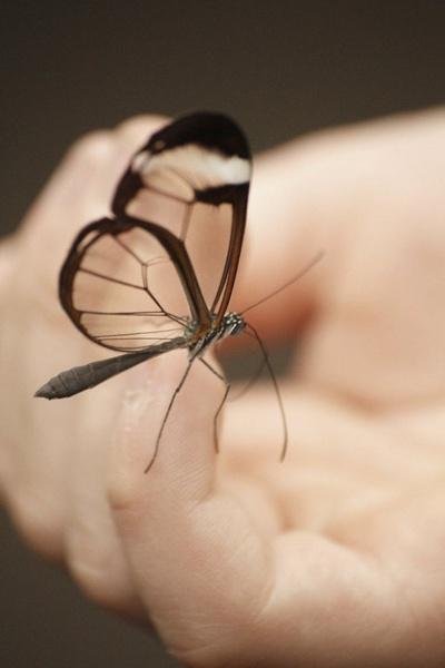 Butterfly Bristol Zoo Gardens by ahphotographyuk