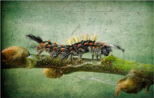 Texturepillar by chase
