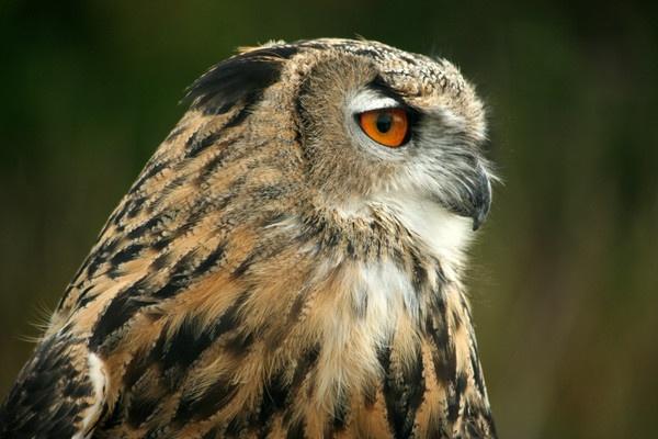 owl by curt