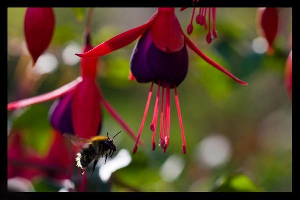 Pollen hunter by michaelo
