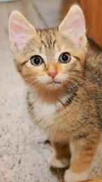 Kitten 'Peaches'