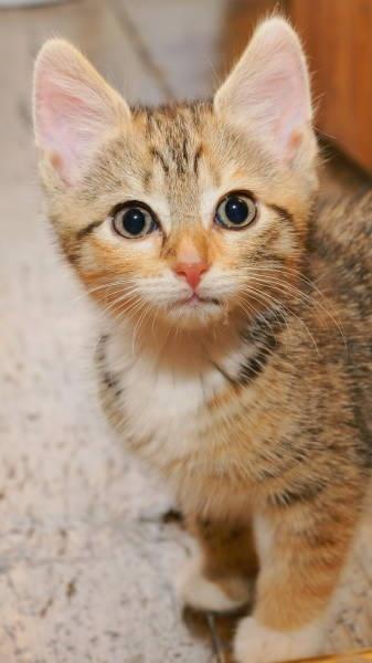 Kitten \'Peaches\' by SexyDan