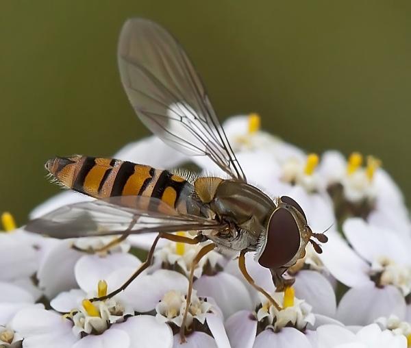 Pretty bug by gary_d