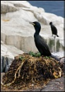 Shag on Nest by Tracey_McGovern