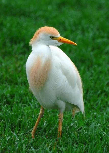 south african bird by geoffmilner