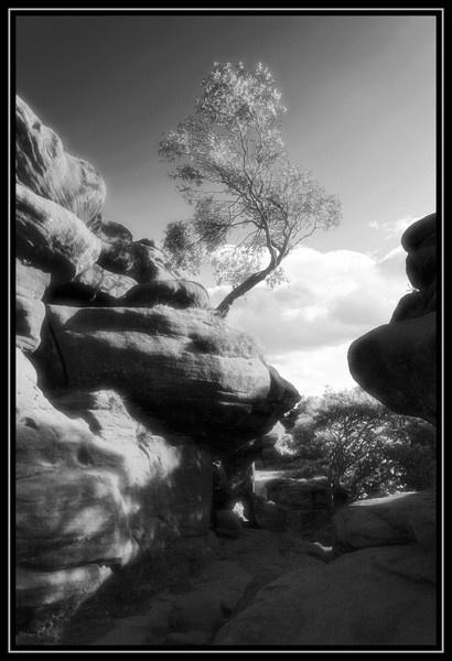 Brimham Rocks by Ladynina