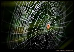Autumn Spider Web