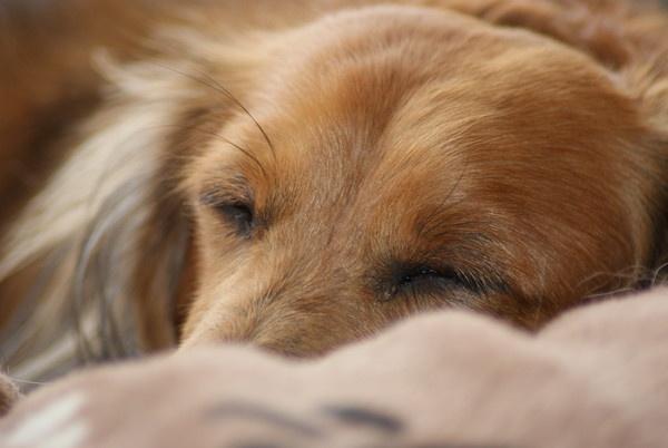 Dog Tired by Gazsu