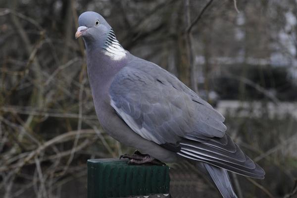 Bird by trevmsklly