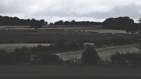 landscape by Tamar