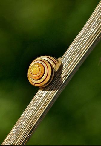 Snail on a stick...! by polly470