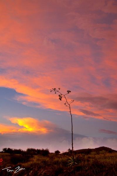 Sonoran Desert, USA by zhou