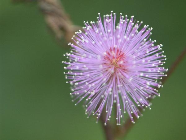 wild flower by indrapsaja