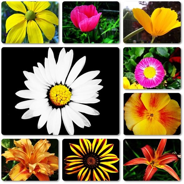 Flowers~Flowers~Flowers by RoxyMoo
