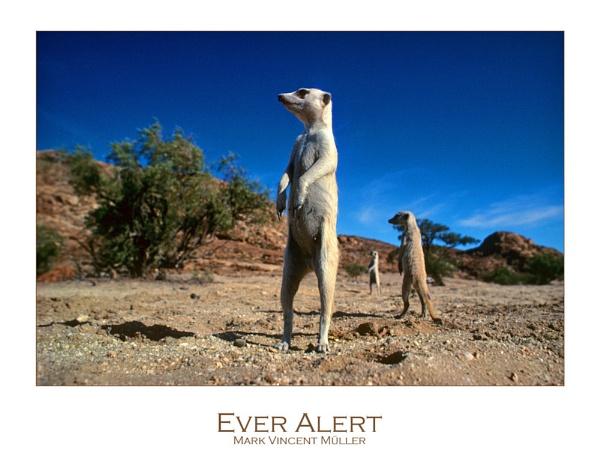Ever Alert by MarkVMueller