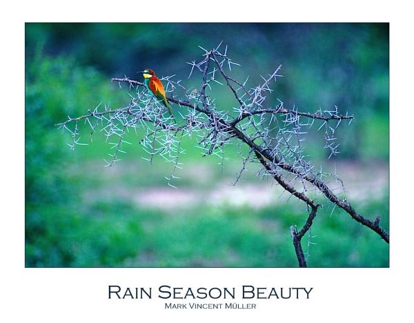 Rain Season Beauty by MarkVMueller