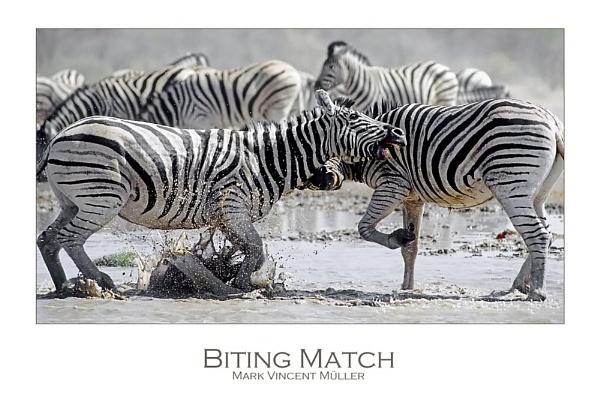 Biting Match by MarkVMueller