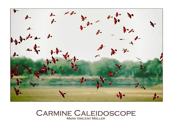 Carmine Caleidoscope by MarkVMueller