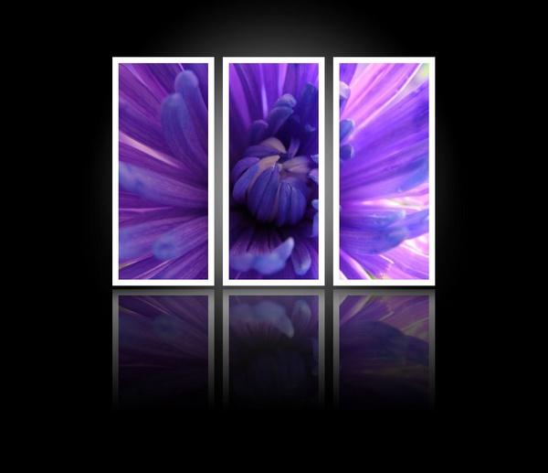 Purple by Rach_s
