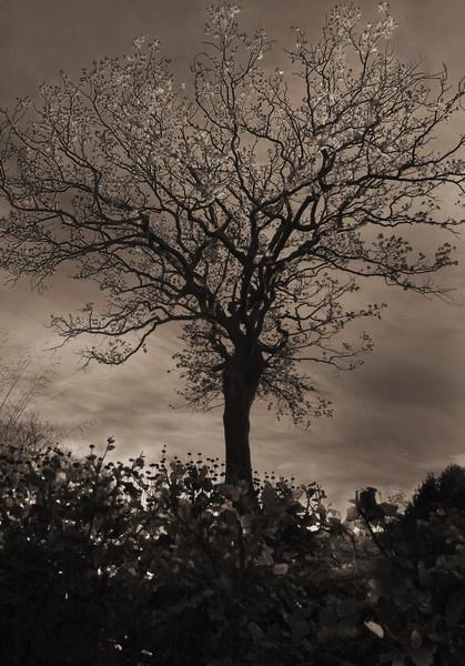 Winter Tree by cmorton