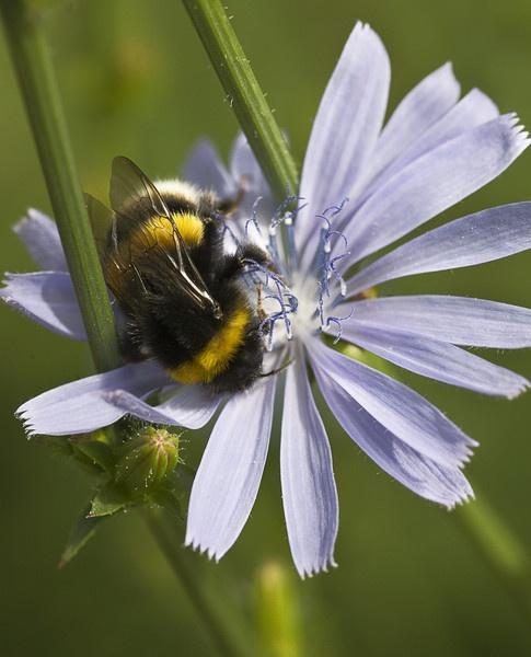 buzz buzz by cmorton