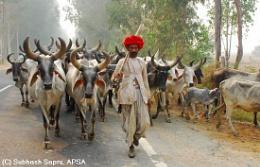 Towards New Pastures