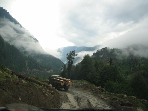 Timber ride by tashi
