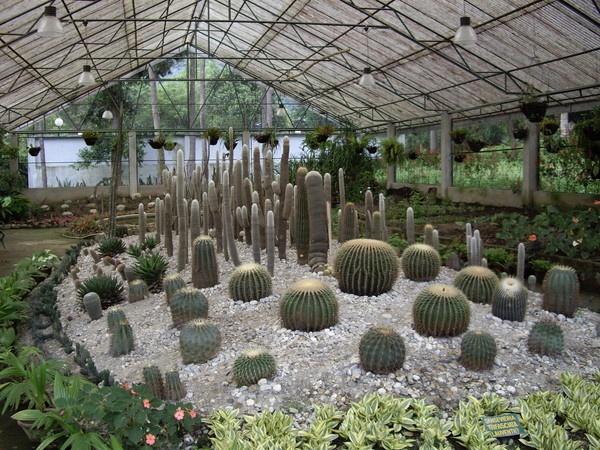 Cacti by tashi