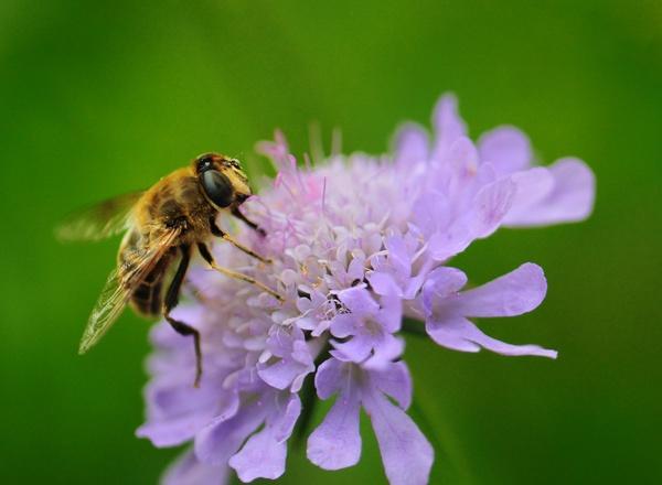 Gathering Pollen by rogerbryan