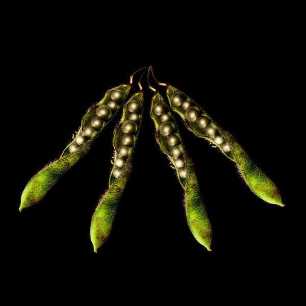 Peas in a Pod by Wallybazoom