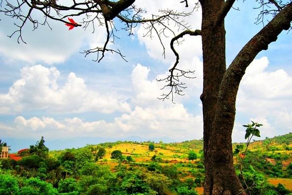 tree by rajasekaranamie