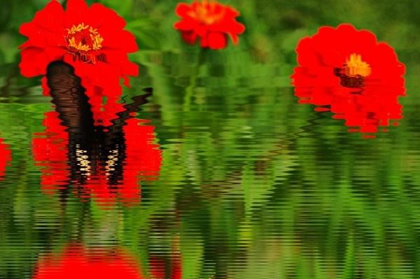 dream butterfly by rajasekaranamie