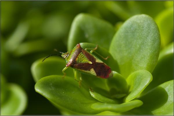 shiel bug soaking up the sunshine by michaelo