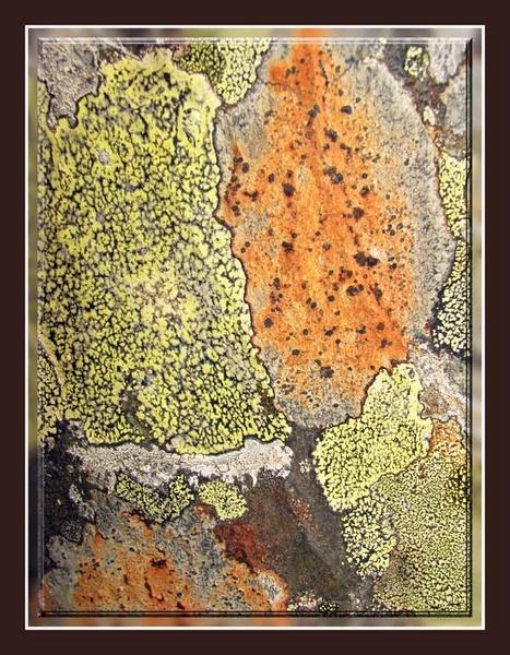 Lichen by ANDYH62