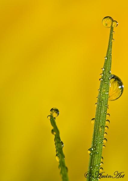 Dew drops by zulupentax