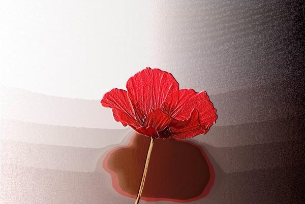 Poppy by Gazsu