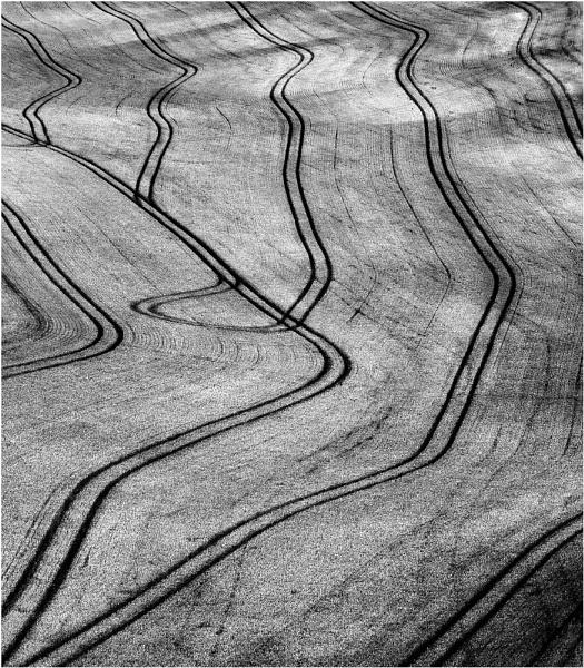 Wheat Fieldscape by Heliopause