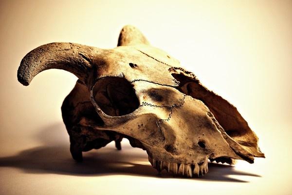 bones by Tamar