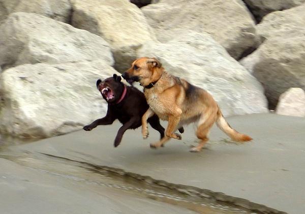 Dog Play by seaviewlou