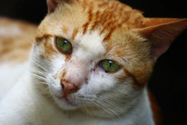 cat eyes by shreel